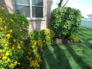 Trim flowering bushes after their blooming cycle so you don't loose any flowers the next year