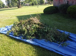 Rake the trimming debris into piles to place in paper lawn bags or rake directly into a tarp and haul off